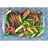 Microcitrus Australasica mix de 10 graines