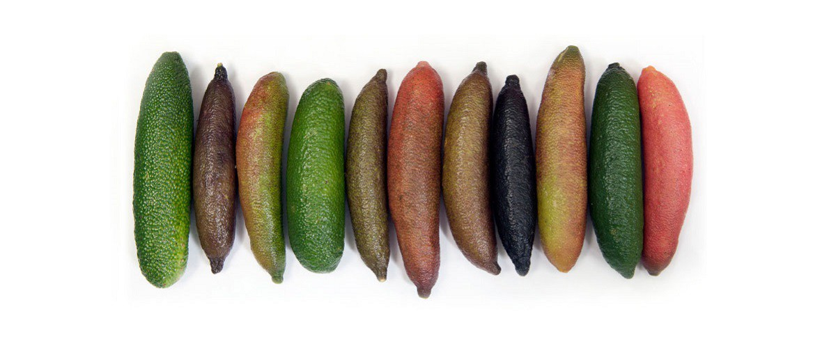 Accueil Citron Caviar Suisse